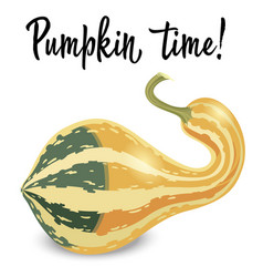 Oblong striped pumpkin isolated on white vector