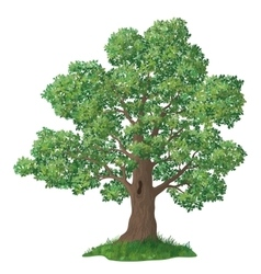 Oak tree and green grass vector