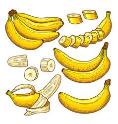 set of colored bananas tropical symbols vector image vector image
