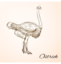 doodle ostrich vector image