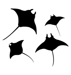 Manta on white background vector