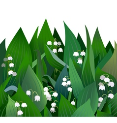 Blossoming lilies of the valley flowers and leaves vector