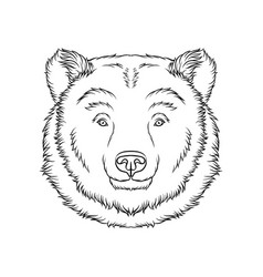 sketch of bears head portrait of forest animal vector image vector image