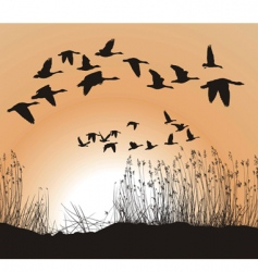 Reeds and geese vector