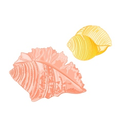 Collection-marine-seashells vector