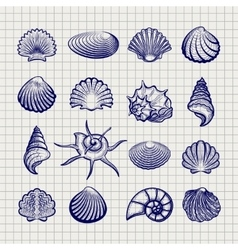 Ball pen sketch sea shells vector image vector image