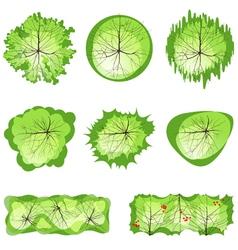 trees for landscape designs vector image