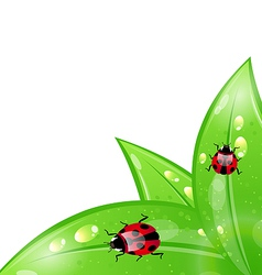 Ladybugs leaves background vector