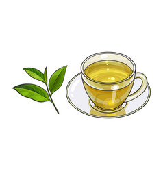 Glass cup saucer and fresh green tea leaf vector