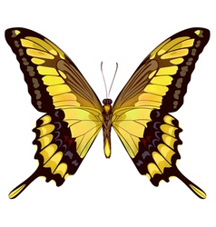 isolated yellow butterfly vector image vector image