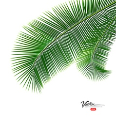 Coconut leaves isolated on white background vector