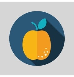 Apricot flat icon with long shadow vector