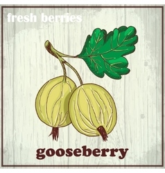 Hand drawing of gooseberry fresh vector