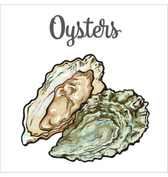 Fresh oyster isolated on a white background vector