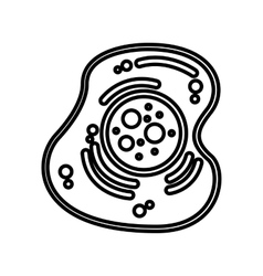 cell structure isolated icon vector image
