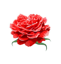 Image of red rose isolated on white background vector