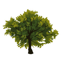 tree oak clip art vector image vector image