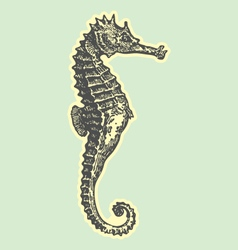 hand drawn sea horse vector image