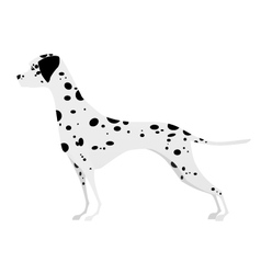 Adorable young dalmatian standing in profile vector