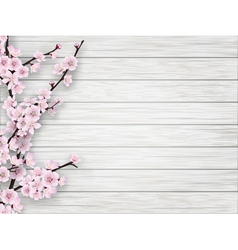 spring cherry pink flower on white old wood vector image
