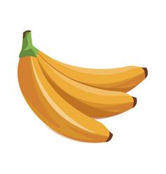 Banana fruit tropical food vector