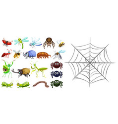 Different types of bugs and spiderweb vector