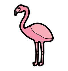 Flamingo bird tropical icon image vector