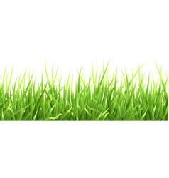 Super realistic grass vector