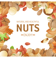 Background with different nuts vector