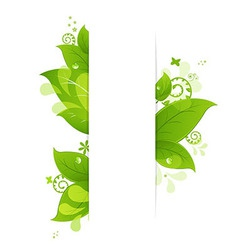 Natural background with leaves and drops vector