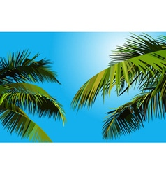 painted blue sky with palm leaves vector image