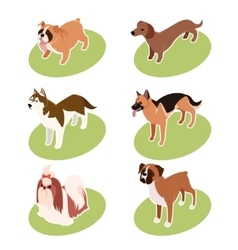 Collection of isometric dogs vector