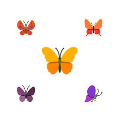 Flat moth set of moth danaus plexippus violet vector
