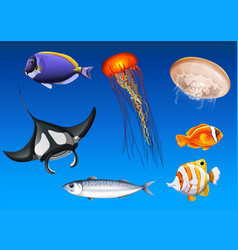 Different kinds of sea animals underwater vector