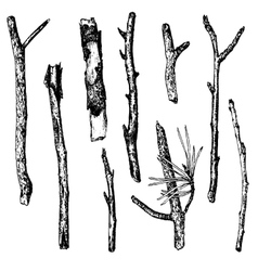 Ink drawing wood twigs vector