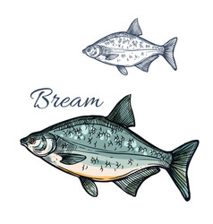 Bream fish isolated sketch icon vector