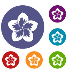 Frangipani flower icons set vector