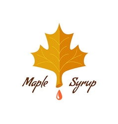 Maple syrup sign Logo with leaf drop and text vector image