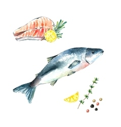 Watercolor salmon vector