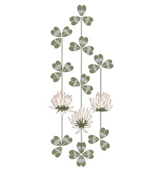 flowers of clover vector image vector image