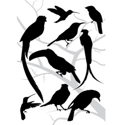 Silhouettes of tropical birds vector