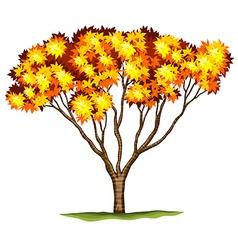A bloodgood japanese maple tree vector