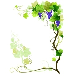 Vineyard frame vector