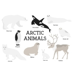 Arctic animals collection vector