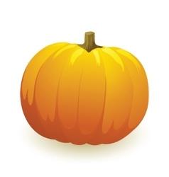 Pumpkin vegetable fruit isolated on white vector