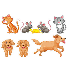 set of dogs and cats vector image vector image