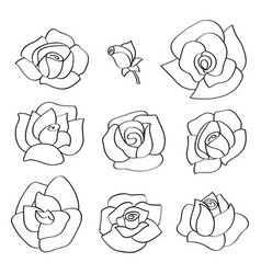 set with line roses hand-drawn flowers vector image vector image