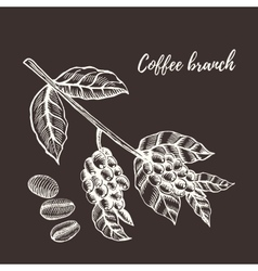 Coffee branch with berry hand drawn vector