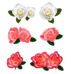 big group of white and red roses vector image vector image