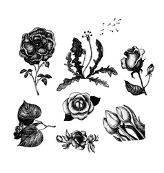 Collection of vintage hand drawn flowers vector